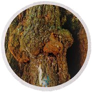 Z Z In A Tree Round Beach Towel