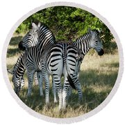 Three Zebras Round Beach Towel