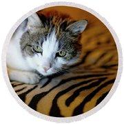 Zebra Cat Round Beach Towel