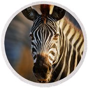 Zebra Close-up Portrait Round Beach Towel