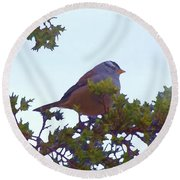 White Crowned Sparrow In Cedar Round Beach Towel