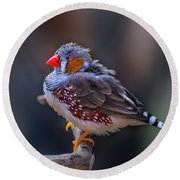 Zebra Finch Round Beach Towel