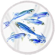 Zebra Fish, Danio Round Beach Towel by Suren Nersisyan