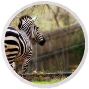 Zebra Round Beach Towel by Lana Trussell
