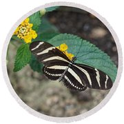 Round Beach Towel featuring the photograph Zebra Longwing Butterfly - 1 by Paul Gulliver