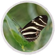 Round Beach Towel featuring the photograph Zebra Longwing Butterfly - 2 by Paul Gulliver