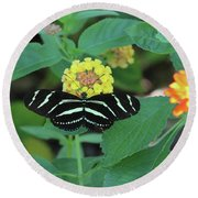Zebra Longwing Butterfly Heliconius Charitonia Round Beach Towel