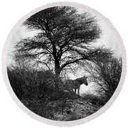 Round Beach Towel featuring the photograph Zebra On A Hill  by Ernie Echols