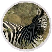 Zebra Portrait Round Beach Towel