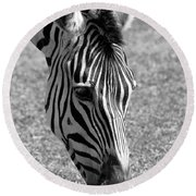 Zebra Portrait Round Beach Towel