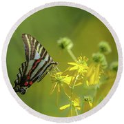Round Beach Towel featuring the photograph Zebra Swallowtail Butterfly by Lori Coleman