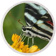 Zebra Swallowtail Drinking On The Fly Round Beach Towel