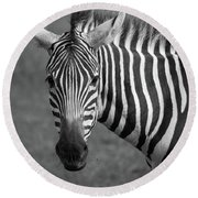 Round Beach Towel featuring the photograph Zebra by Trace Kittrell