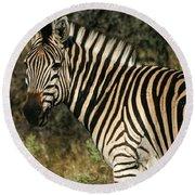 Zebra Watching Round Beach Towel