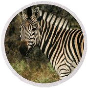 Zebra Watching Round Beach Towel
