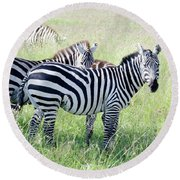 Zebras In Serengeti Round Beach Towel