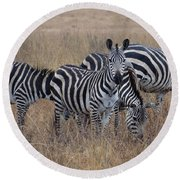 Zebras Walking In The Grass 2 Round Beach Towel