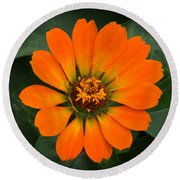 Zinnia 2 Round Beach Towel