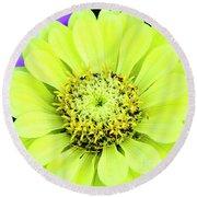 Zinnia Flower Round Beach Towel