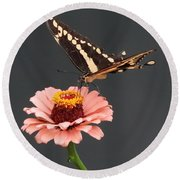 Zinnia With Butterfly 2702 Round Beach Towel