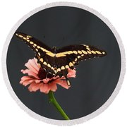 Zinnia With Butterfly 2708  Round Beach Towel