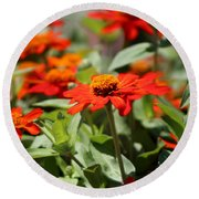 Round Beach Towel featuring the photograph Zinnias In Autumn Colors by Colleen Cornelius