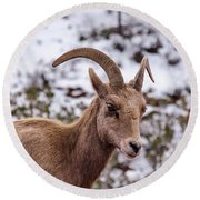 Zion Bighorn Sheep Close-up Round Beach Towel