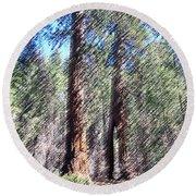 010219 Red Woods California Round Beach Towel