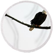 Bald Eagle 120501 Round Beach Towel