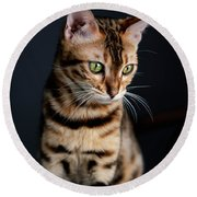 Bengal Cat Portrait Round Beach Towel