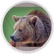 Brown Bear 5 Round Beach Towel
