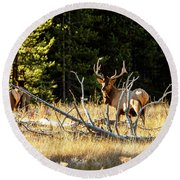 Round Beach Towel featuring the photograph Bull Elk  by Pete Federico