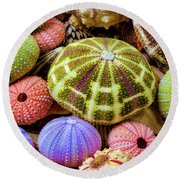 Colorful Sea Urchins Round Beach Towel