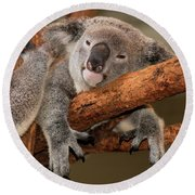 Cute Australian Koala Resting During The Day. Round Beach Towel