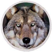 Gray Wolf Portrait Endangered Species Wildlife Rescue Round Beach Towel