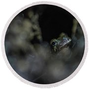 Grey Tree Frog  Round Beach Towel