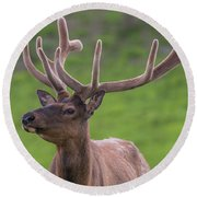 Round Beach Towel featuring the photograph ME1 by Joshua Able's Wildlife