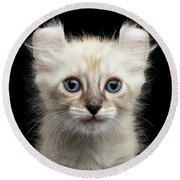 Mekong Bobtail Kitty With Blue Eyes On Isolated Black Background Round Beach Towel
