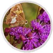 Moth On Purple Flowers Round Beach Towel