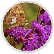 Moth On Purple Flowers Round Beach Towel