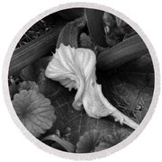 Round Beach Towel featuring the photograph New Life by Rosanne Licciardi