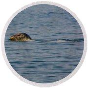 Pacific Harbor Seal Round Beach Towel