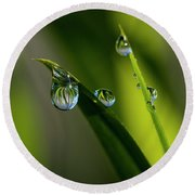 Rain Drops On Grass Round Beach Towel