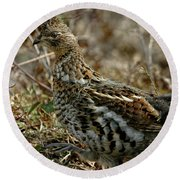 Round Beach Towel featuring the photograph Ruffed Grouse 50702 by Rick Veldman