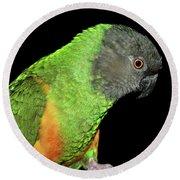 Senegal Parrot Round Beach Towel
