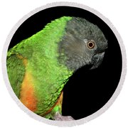 Senegal Parrot Round Beach Towel