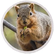 Snacking Squirrel Round Beach Towel