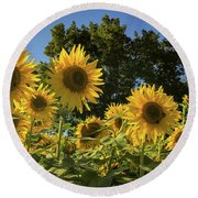Sunlit Sunflowers Round Beach Towel