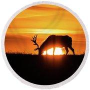Sunrise Elk Round Beach Towel