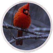 The Curious Cardinal  Round Beach Towel